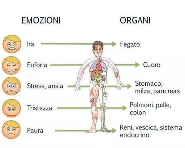emozioni-organi