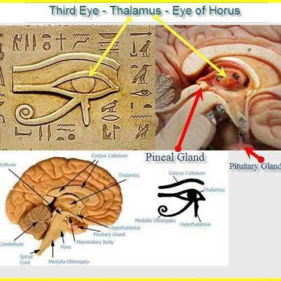 1605765_Ancient-Egypt-and-the-Pineal-Gland_thumb_big