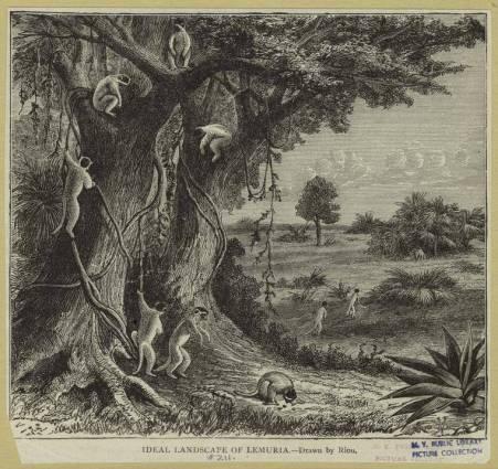landscape-of-lemurs