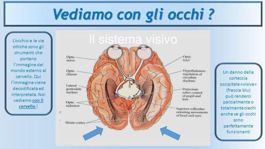 vediamo con il cervello