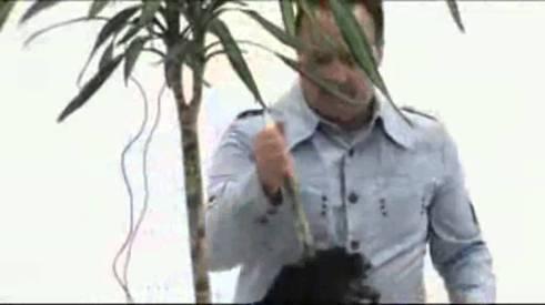 assassino pianta